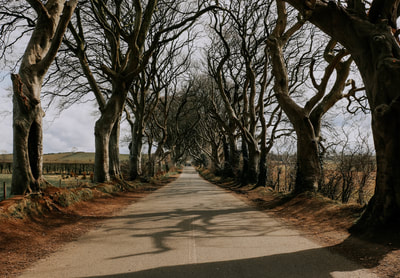 The Dark Hedges - Live Tiny & Travel
